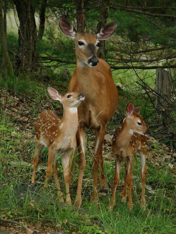 La famille royale de l'automne.