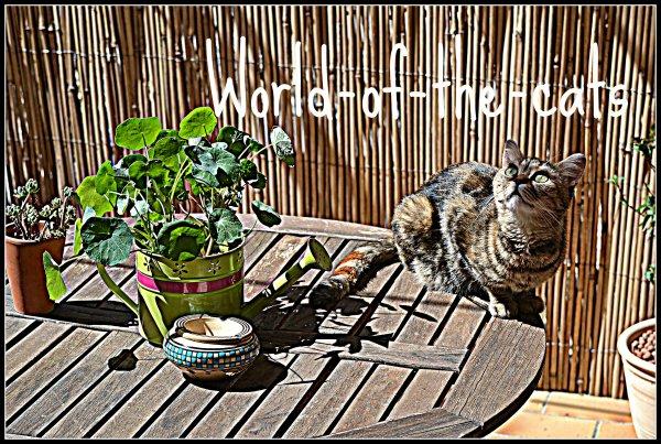 Pour le concours de World-of-the-cats