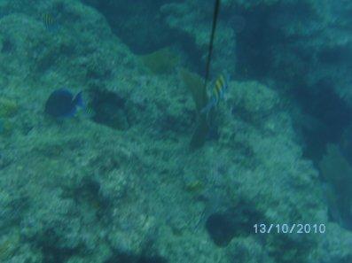 KEYWEST plonger