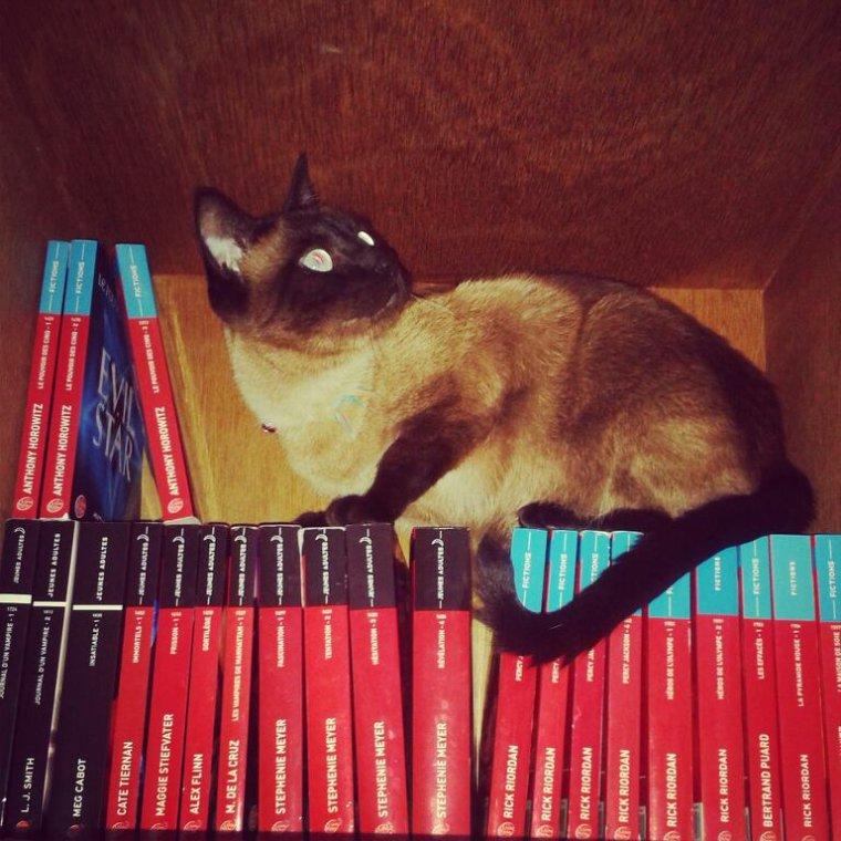 Chat gardien de livre