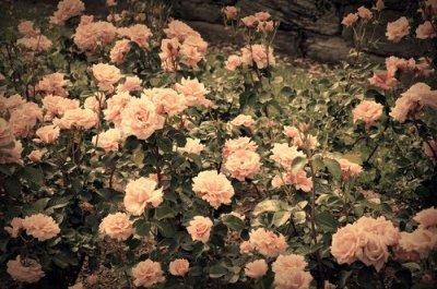 l'amour c'est beau mais sa peu détruire et faire mal a la fin...