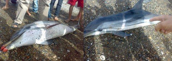 Animal marin retrouvé mort en presqu'ile