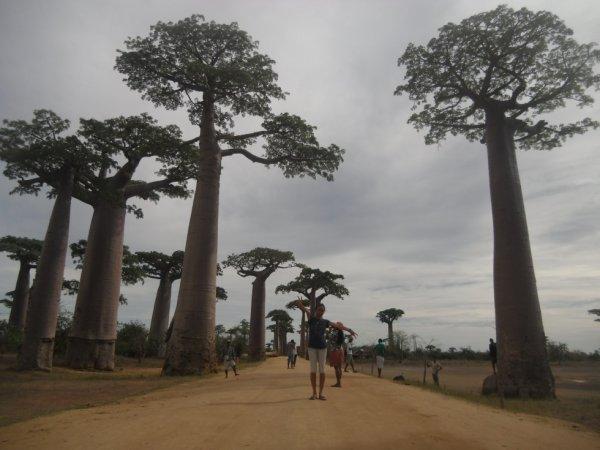 à l'allé des baobab Morondava_madagascar