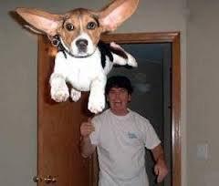 Le chien de super man