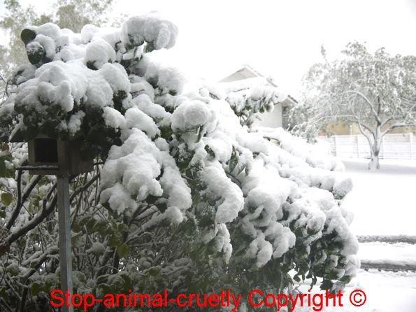 La neige & ses dégats
