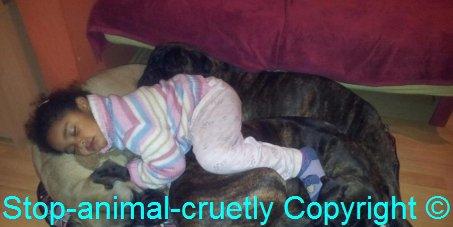 Pétition loi 56-12 extermination des chiens au Maroc