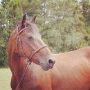 Photo de vente-horse-06