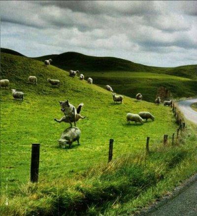 genial le saut de mouton