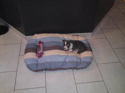 Son arrivée à la maison, le 10/09/2010