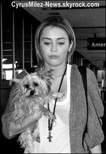 Suis Jour apres Jour la vie delirante de Miley Ray Cyrus.