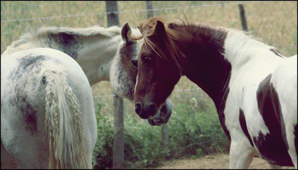 Cheyenne & Hanska .
