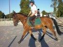 Photo de travail-des-chevaux