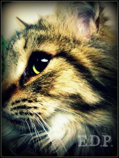 Le chat aveugle .... Miaw !