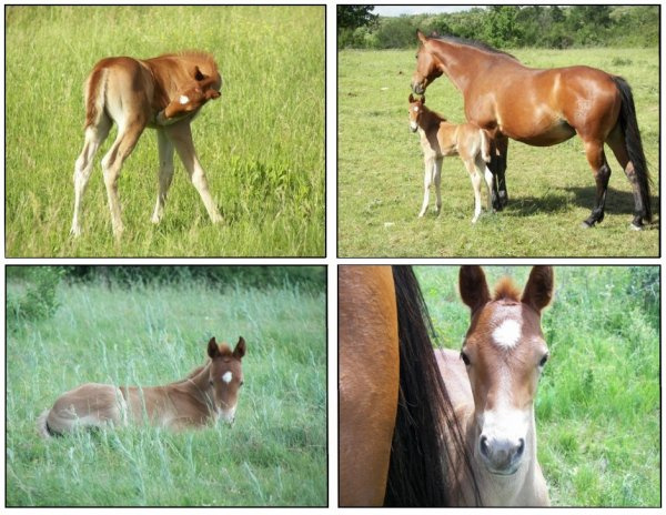 Tallie Jollie version Foal :)