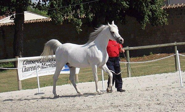 le show equestre: grace et surtout fierte