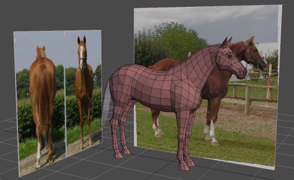 theme 4:les partie du cheval