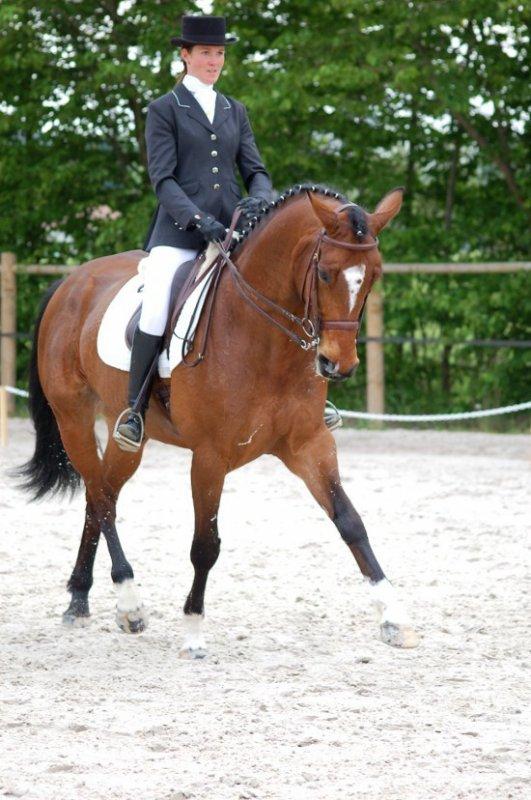 gigolo! nan c'est un cheval son nom est gigolo !