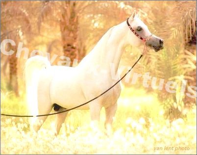 blog: chevaux-virtuel !!!!!genial!!!!! :D