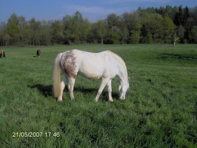 Blog de chevaux0123