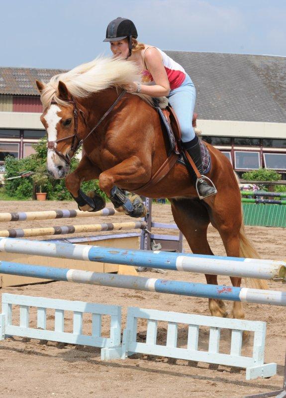 """Pourquoi une équitation dite """"éthologique"""" ?"""