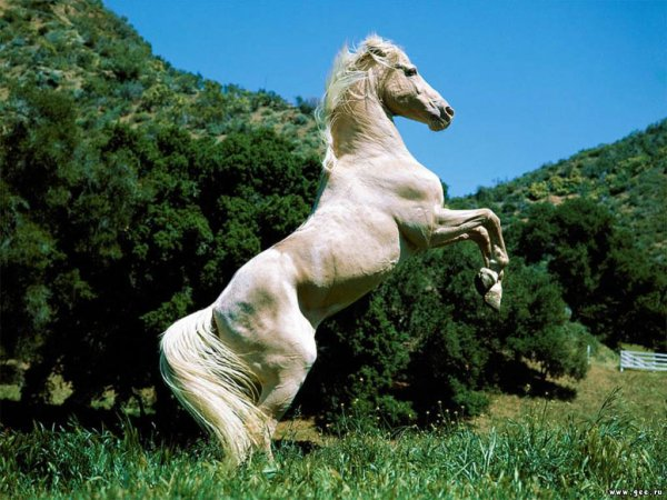 Cheval <3