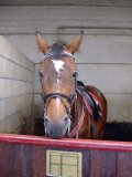 Photo de equitation-vente