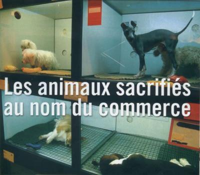Les animaux d'animaleries