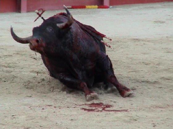 Les horreurs des corridas