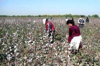 » le coton ; de la production à la consommation