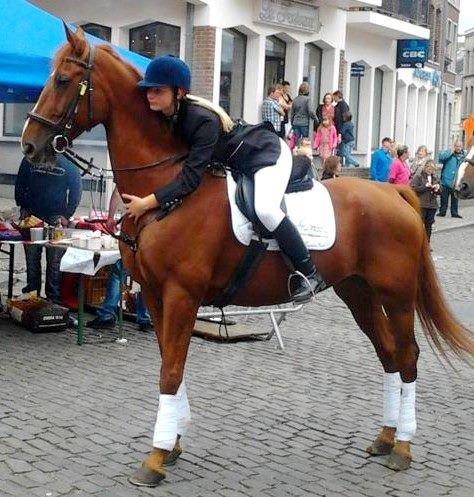 Le cheval de ma vie. Larry Gesmeray♥