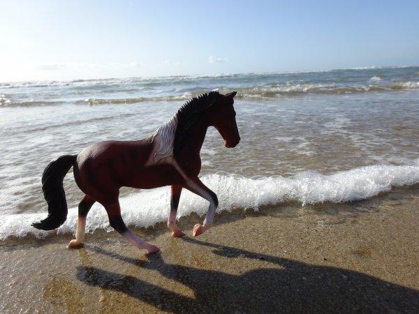 photos a la plage 2!
