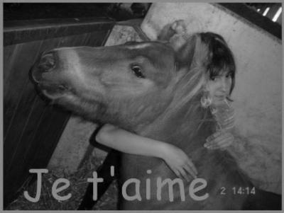 Avez vous déjà rensentit de l'amour pour un cheval ? Ce sentiment qui nous fait tous réver.