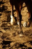 Photo de Phot0graphiie-Equine