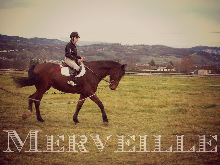 Je vois parfois dans le regard d'un cheval la beauté inhumaine d'un monde d'avant le passage des hommes