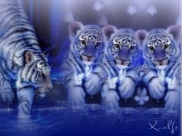 tigron