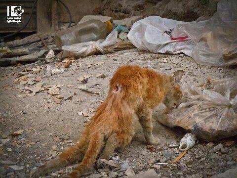 Les animaux souffrent en Syrie à cause du criminel Bachar et ses soldats