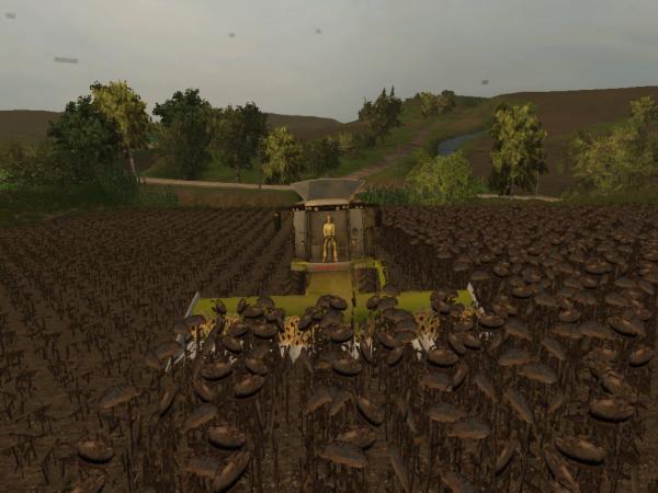 sur land of italy on coupe déja les tournesol
