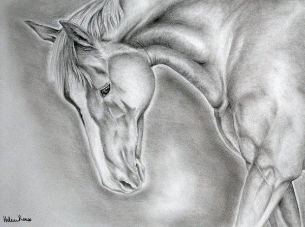 Dessin de cheval