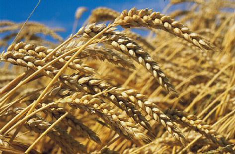 Quand le libéralisme détruit l'agriculture et met la planète en danger