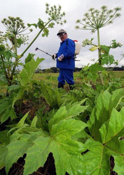 Ces espèces invasives menacent le Luxembourg