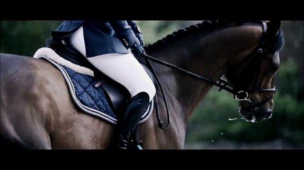 L'homme et le cheval sont dans deux mondes différents ! Ce qui compte, ce n'est pas la méthode employée mais la façon d'aborder les choses.