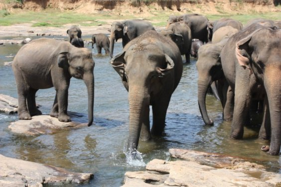 L'ORPHELINAT DES ELEPHANTS