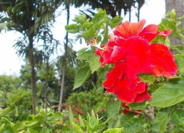 Quelques photos de fleurs prises autour de la piscine