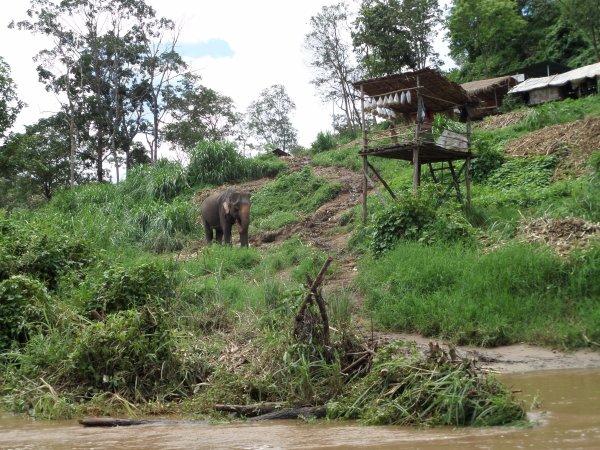 Trek à dos d'éléphants