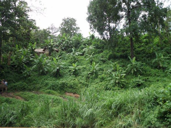 Le fleuve Maetaeng