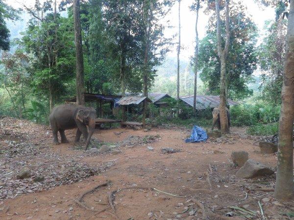 L'île de l' éléphant !