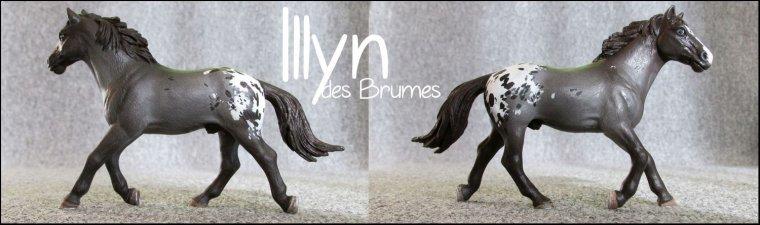 Illyn
