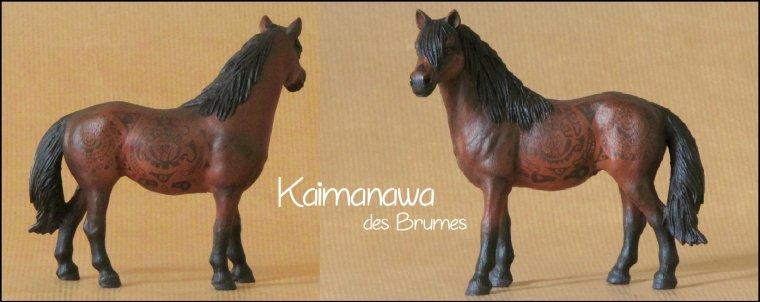 Kaimanawa