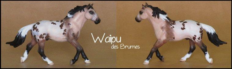 Waipu