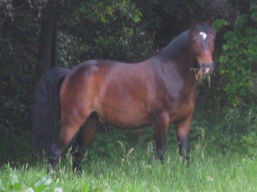 Mon cheval, Mon roi